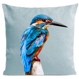 LITTLE BLUE BIRD - MIAMI BLUE