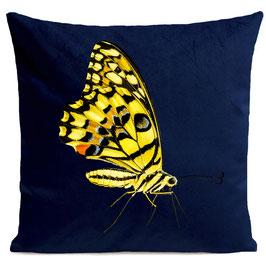 YELLOW BUTTERFLY - DEEP BLUE