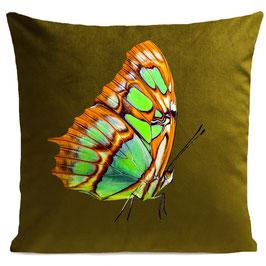ORANGE BUTTERFLY - OLIVE GREEN