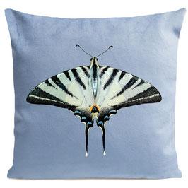 ZEBRA BUTTERFLY  - LIGHT BLUE