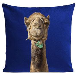 SMILING CAMEL - KLEIN BLUE