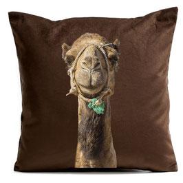 Smiling Camel - Brown