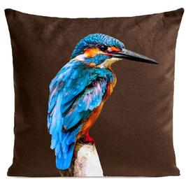 LITTLE BLUE BIRD - BROWN