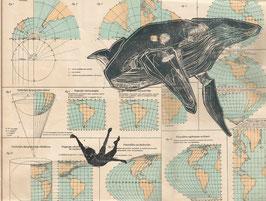 Wale Illustration Print
