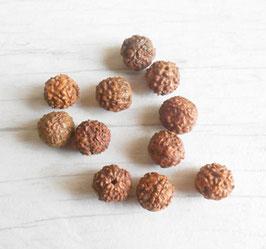Lot perles graines de Rudraksha