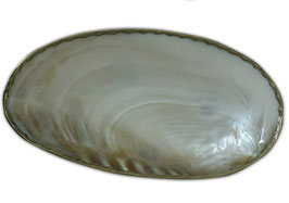 Maxi coquillage serti de bronze
