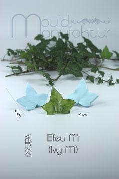 Efeu M (Ivy M)