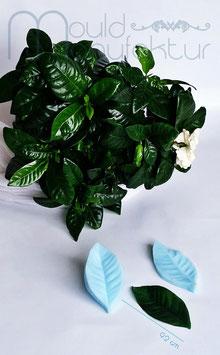 Gardenie Blatt L  (Gardenia Leaf L)