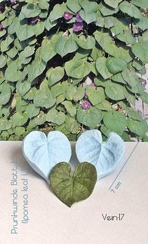 Prunkwinde Blatt L (Ipomea Leaf L)