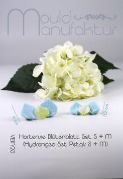 Hortensie Blütenblatt  S&M  (Hydrangea Petals S&M)