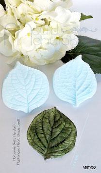 Hortensie Blatt Herzform  (Hydrangea Heart Shape Leaf)