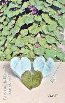 Prunkwinde Blatt M  (Ipomea Leaf  M)