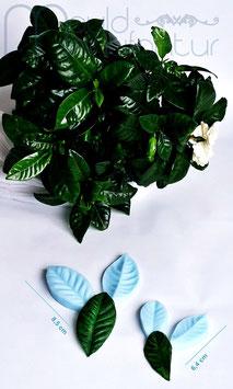 Gardenie Blatt S&M  (Gardenia Leaf S&M)