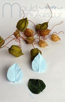 Lampionblume  Blatt   (Chinese Latern  Leaf)