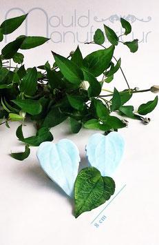 Clematis Blatt   (Clematis  Leaf)