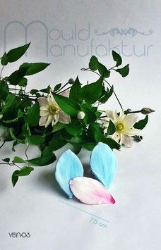 Clematis Blütenblatt  (Clematis  Petal)
