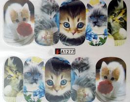 zuckersüße Katze NR. A1277