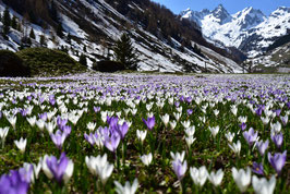 Spring in the Swiss Alps