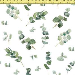"""Vorbestellung """"Eukalyptus"""" Eigenproduktion"""