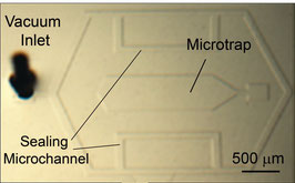 The 'Mechanical Immobilization' Chip