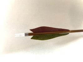 Carbonpfeil Olivbaum