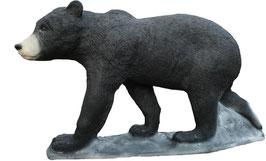 SRT junger Schwarzbär