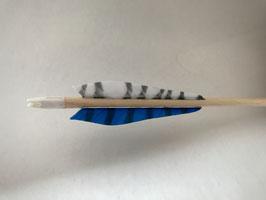 Holzpfeil Blue Tiger