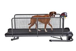 Fit Fur Life Hundelaufband superior