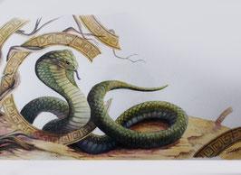 Cobra - Aquarelle