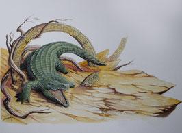 Crocodile - Aquarelle