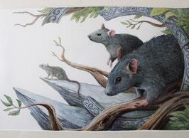 Souris/Rat - Aquarelle