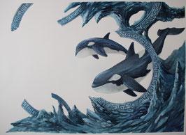 Orque - Aquarelle