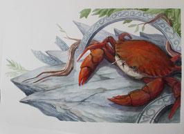 Crabe - Aquarelle
