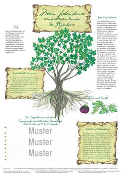 Der Feigenbaum 14.06. - 23.06. & 12.12. - 21.12.
