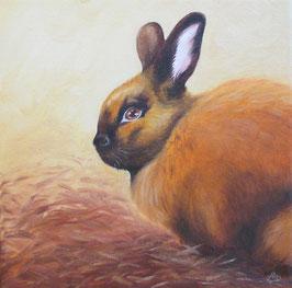 Thüringer Zucht-Kaninchen