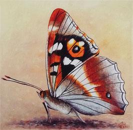 Schmetterling rostbraun