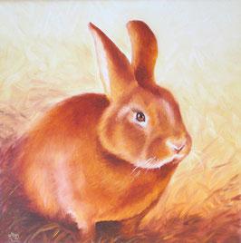 Neuseeländer Zucht-Kaninchen