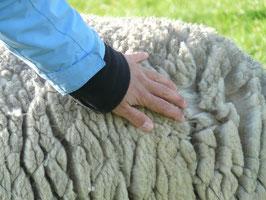 Schafwolle naturbelassen und ungewaschen