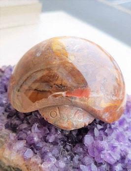 scarabée sculter pietersite