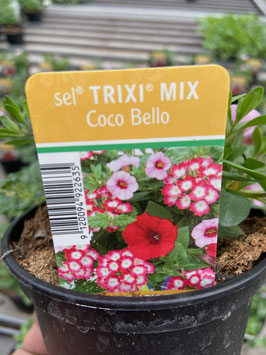 Trixi Mix ´coco Bello´