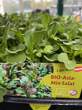BIO Asia-Mix-Salat