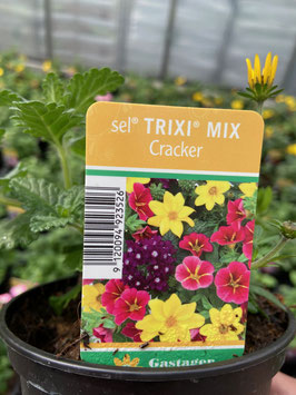 Trixi Mix `Cracker`