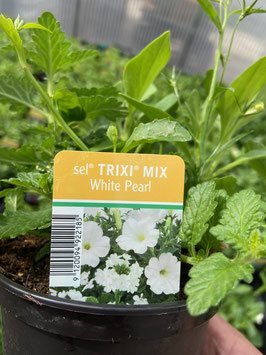 Trixi Mix ´White Pearl´