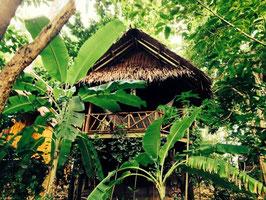 Phi Phi Bungi