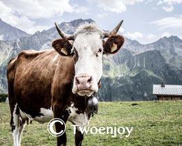 Haute Savoie vache