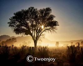 Lever de soleil désert Namibie