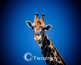 Girafe parc Etosha