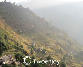 Rizière népalaise