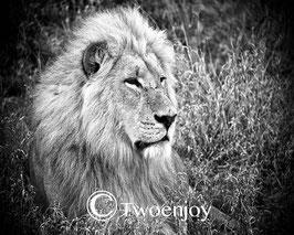 Lion Parc de Chobe