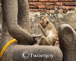 Singe Lopburi Thailande
